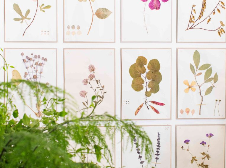 Libby Kerr  botanical print wall at studio of floral artist Fleur McHargimage courtesy The Grace Tales