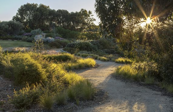 Australian native path landscape at sunset