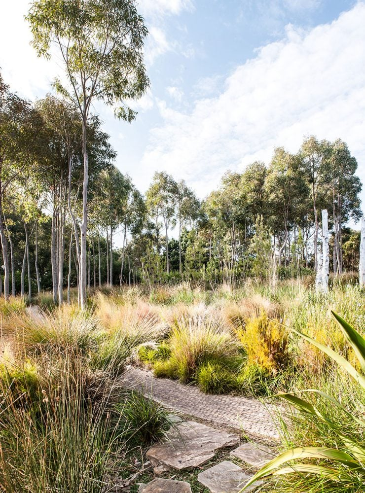 landscape of Austalian native grass and bush a gardeners sanctuary