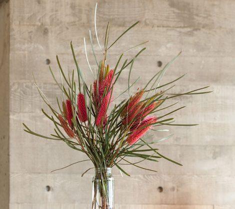Hakea francisiana 'Emu Tree' flowers in vase
