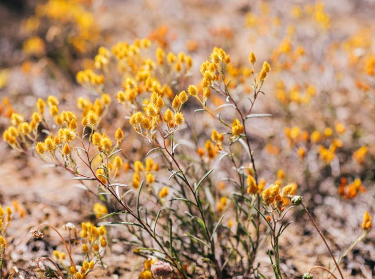 at 2017sep22 onlinestory wildflowers 1000x584px6